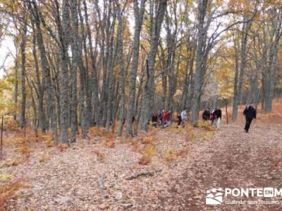 El Castañar de El Tiemblo, viajes senderismo madrid; senderismo en españa